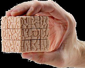 brain-hand